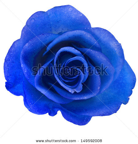 stock-photo-beautiful-blue-rose-with-water-drops-surface-close-up-background-149592008